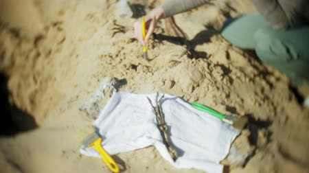 reptile : The woman is engaged in excavating bones in the sand, Skeleton and archaeological tools. Stock Footage