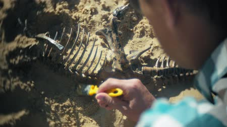 jura : The man is engaged in excavating bones in the sand, Skeleton and archaeological tools.