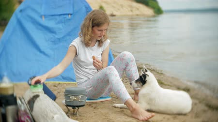 костра : Women cooking food in bowler in camping with tent on the background. the dog walks by the side