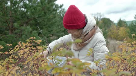 avuç : Young woman picking berries in the forest in the fall in cold weather
