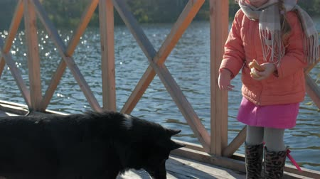wooden bridge : little girl, daughter, in warm clothes, playing with a dog, feeding her, eating bread, picnic by the river on a wooden bridge, weekend, cold weather, camping, tourism