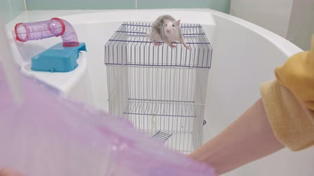 szczur : a young woman takes care of a pet, washes a pan under the tap with water and cleans the cage in the bathroom, a rodent, a rat climbs the cage