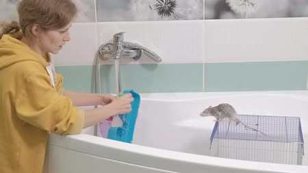 szczur : a young woman takes care of a pet, washes a labyrinth under a tap with water and cleans a cage in the bathroom, a rodent, a rat climbs around the cage Wideo