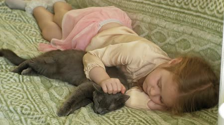 кошачий : happy girl child with blond hair and pigtails lying on the sofa stroking a gray cat Стоковые видеозаписи