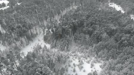 крытый : winter pine snowy forest, aerial view with drone Стоковые видеозаписи