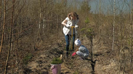 restaurálás : Planting tree saplings. Forest restoration, protection of ecology.
