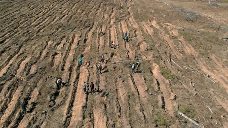 restaurálás : Forest restoration. Ecology conservation. Aerial shooting