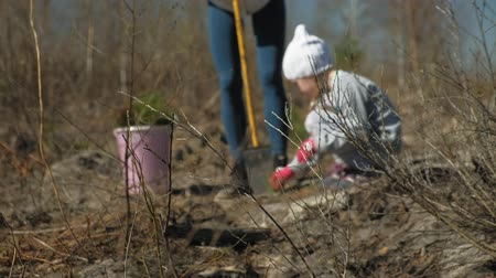 ツリー : Planting tree saplings. Forest restoration, protection of ecology.
