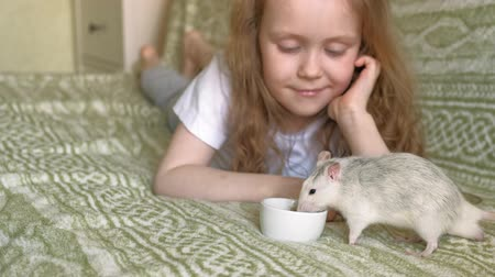 caring : baby girl playing with a rat
