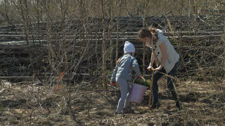 復元する : Planting tree saplings. Forest restoration, protection of ecology.