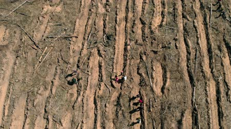 each other : Forest restoration. Ecology conservation. Aerial shooting
