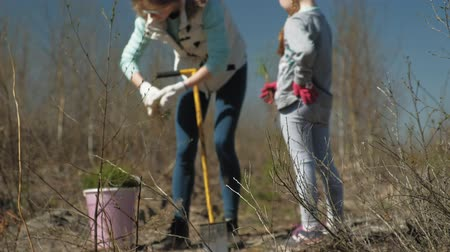 zahradník : Planting tree saplings. Forest restoration, protection of ecology.