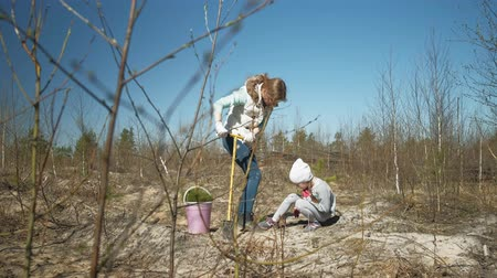 obnovit : Planting tree saplings. Forest restoration, protection of ecology.
