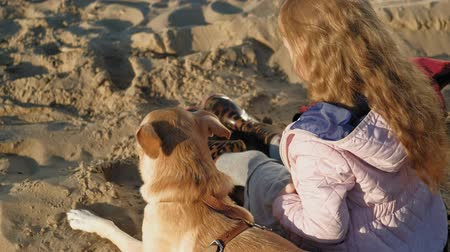 retriever : Girl preschool girl on the beach feeds the dog. Spring