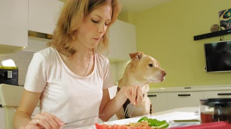 retriever : Woman with a dog in the kitchen at the table. Breakfast. Friendship of man and pet.