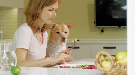 лабрадор : Woman with a dog in the kitchen at the table. Breakfast. Friendship of man and pet.