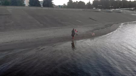 brood : Mom and daughter, run, play with a brown dog labrador on the beach by the river. Aerial filming Stock Footage