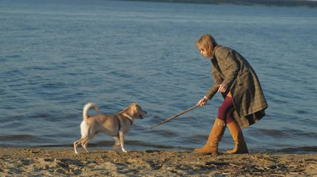 vara : A young woman run, play with a brown dog labrador on the beach on the bank of the river. Spring. Vídeos