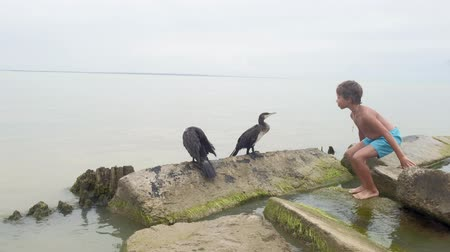Human interaction with wild birds. Sea.Ecology. wild nature