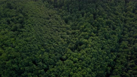Aerial green forest. Carpathian Mountains 動画素材
