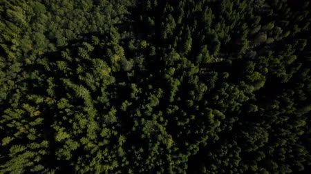Aerial drone shot over the north european forest. Shot in 4K Dostupné videozáznamy