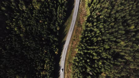 üst : Aerial view flying over asphalt road with green trees of dense woods growing both sides.