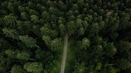 Aerial Drone View Of Forest Trees Landscape In Summer 4K