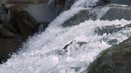 невозделанный : Raging Mountain river. Wildness of clean, clear water in the mountain river. Slow Motion Стоковые видеозаписи