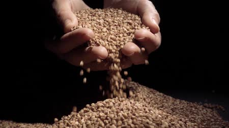 owies : Female hands pours buckwheat grain. Slow motion Wideo
