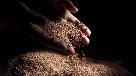 kabuksuz tahıl : Female hands pours buckwheat grain. Slow motion Stok Video