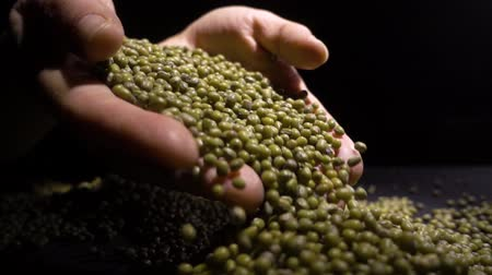 sperziebonen : Closeup of unknown woman hands holding mung beans or green beans