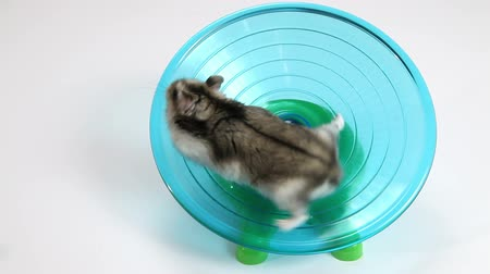 hamsterrad : Hamster am Rad Videos