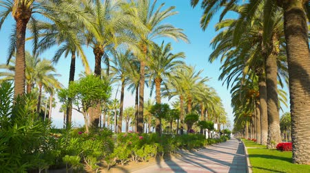 palmas das mãos : Spanish palm trees promenade, Europe Stock Footage