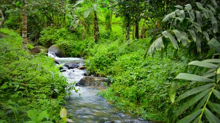 bitkiler : 1080p video with sound - Stream in tropical forest after the rain.