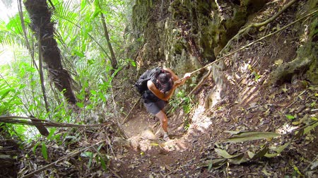 alpinista : Video 1080p - Woman walks down at the forest path in the jungle Vídeos