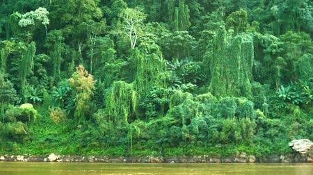 floresta tropical : Video 1920x1080 - Jungle on the banks of the Mekong river. Laos