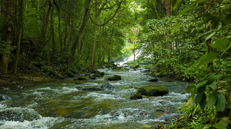 vida selvagem : Video 1920x1080 - Forest. a small river near Chiang Rai. Thailand