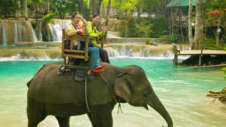prabang : LUANG PRABANG. LAOS - CIRCA DEC 2013: Elephant riding through the woods and the river. a popular tourist attraction
