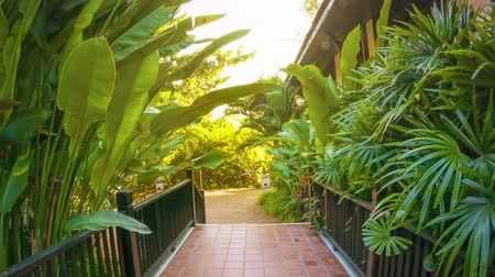 garden route : Video 1080p - Path at the hotel decorated with tropical vegetation. Stock Footage