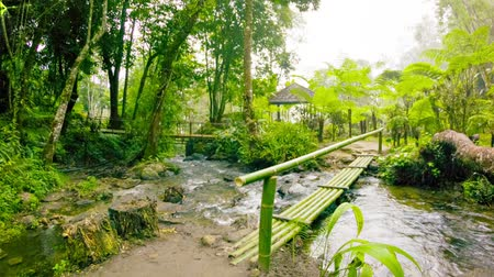 wooden path : Video 1080p - small bamboo bridge on the tourist trail. Thailand. Chiang Mai