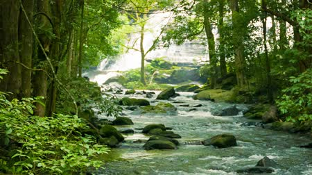 strumień : Video 1080p - Mountain stream near a waterfall in the rainforest