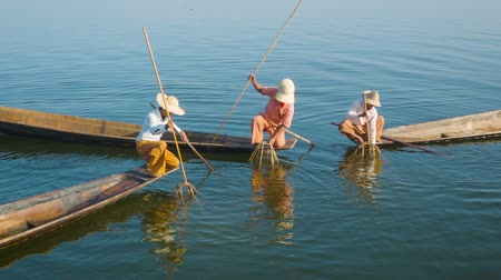 mianmar : Video 1080p - Burmese fishermen on Inle Lake with traditional fish traps