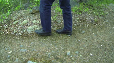 hiking : 1920x1080 video - man walks along the forest path. Northern Forest