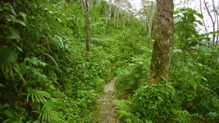 procura : Video 1080p - Running on a forest path on a sunny day. Thailand. Phuket Stock Footage