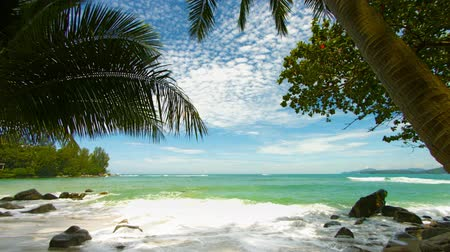 beach panorama : Shore of a tropical beach with palm trees. Vertical panorama Stock Footage