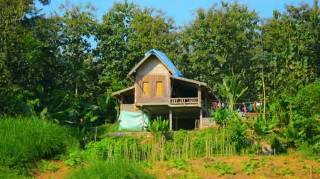 prabang : LUANG PRABANG. LAOS - CIRCA DEC 2013: Wooden house on stilts on a farm near Luang Prabang. Laos Stock Footage