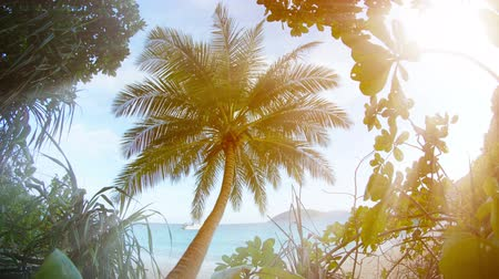 kotva : Video UltraHD  BSolitary coconut palm. as seen through rainforest folliage. with a tropical beach in the background.  Wilderness area in southern Thailand. Dostupné videozáznamy
