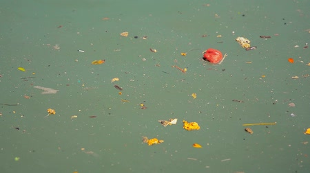 sujo : FullHD video - Pollution in the form of garbage. debris and other filth. floating on the surface of a stagnant pool of water.