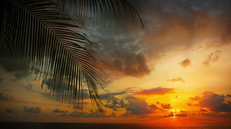 levandule : UltraHD video  Silhouette of palm leaves over a beautiful. dramatically colored. partly cloudy. sunset sky. at a tropical beach.
