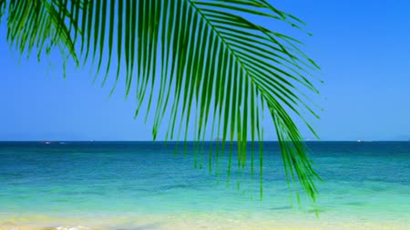 kaland : FullHD video  The calm. crystal clear. blue water of a tropical sea mark a bold horizon line against a bright. cloudless sky. with palm leaves providing shade on a white sandy beach.